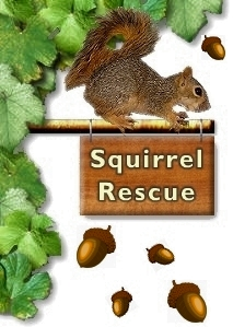 squirrel-rescue